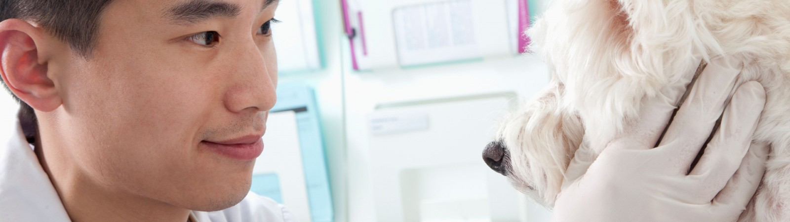 First official guide to UK veterinary degrees released