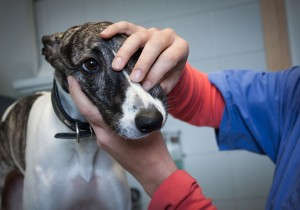 Veterinary schools seeking input from graduate employers